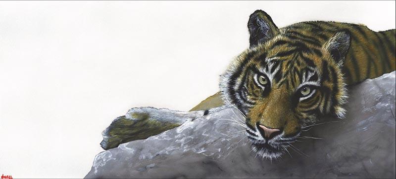 Tiger Nick O'Neill Kent Artist
